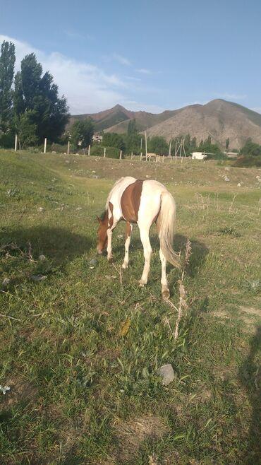 Животные - Шевченко: Лошади, кони