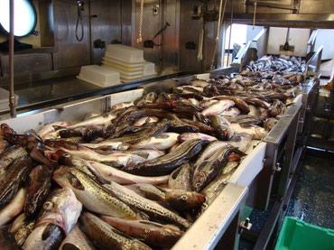 Работа аляска, сша: рыбное в Душанбе