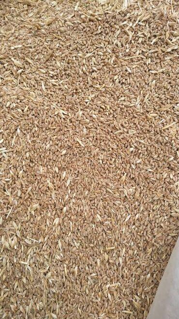 82 объявлений   ЖИВОТНЫЕ: Продаю семена пшеница интенсивная