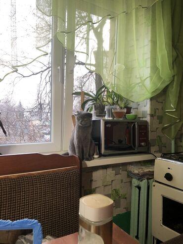 2694 объявлений: Коты