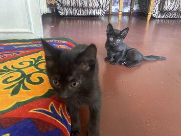 jubka na vysokoj posadke в Кыргызстан: Отдам котят только в хорошие руки добрым людям !!! 1 мальчик и 4 девоч