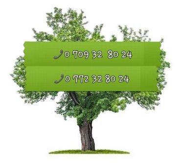 Продаю дерево орех под самоспил. можно для изготовления мебели