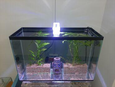 760 объявлений: Продаю аквариумы, в комплекте лампа фильтр растения и рыбки