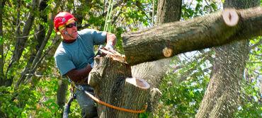 Спилить ветки срубить дерево спилить дерево бак кыям дарак кыям бутак