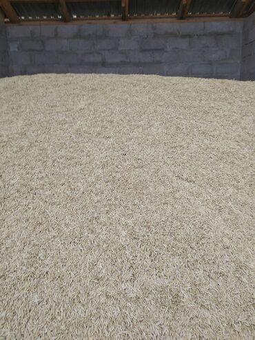Животные - Маловодное: Арпа сатам,баасы 29 сом,2 тонна