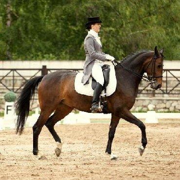 Верховая езда, конный спорт Если Вы мечтаете о серьёзно заниматься кон