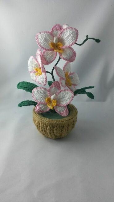 Toxunma Orkideler