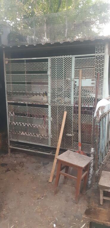 лексус gs 350 цена в Ак-Джол: Продам большую клетку. Каркас из советского квадрата. Пол высечка