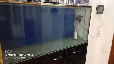 Аквариумы - Кыргызстан: Срочно продаю аквариум размер 129,высота 60 и ширина 35.мини торг