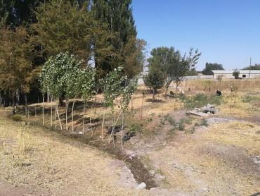 голые в Кыргызстан: Пр-ю 2 кашары Панфиловский р-н село Чалдовар територия 2,4 га размеры