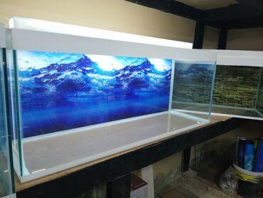 120 litrelik təzə akvarium Başqalarıda var seçim coxdu