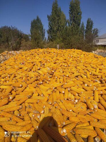 Кукуруза по 16 сом 15 тонн  Тел