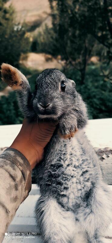 Животные - Пульгон: Продаётся кролики