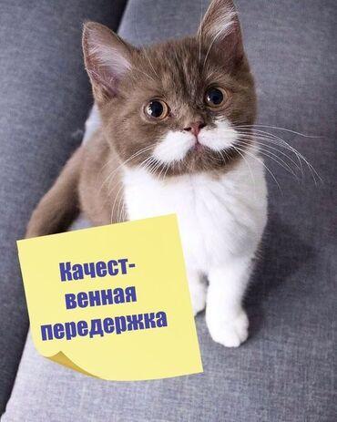 средство для дачных туалетов в Азербайджан: Передержка Присмотрю за кошками в сутки с кормом и туалетом 10м