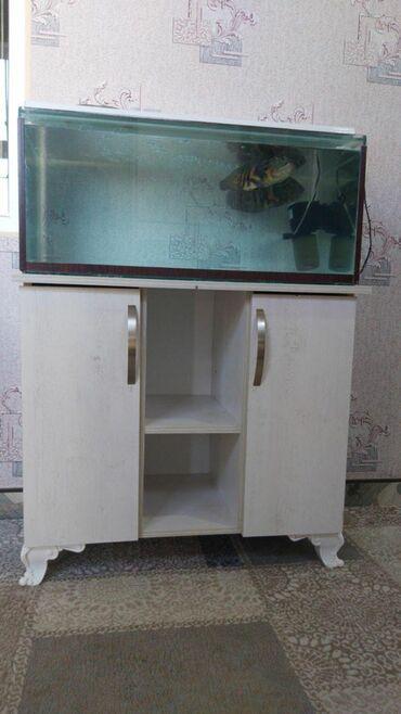 pirani baliqlari - Azərbaycan: Akvarium, wkafi, baliqlari ile birlikde ( 2 eded Oskar) 300 man unvan