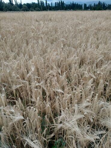 Земельные участки - Беловодское: Продам 6 соток Для сельского хозяйства от собственника