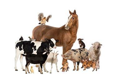 Бирдик матрица - Кыргызстан: Куплю любой павший любой скот самовывоз любое время