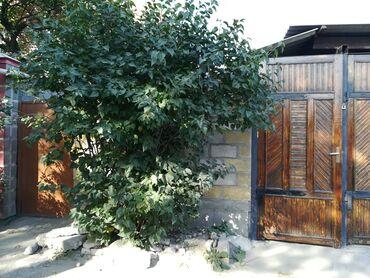 продам дом в Кыргызстан: Продам Дом 80 кв. м, 6 комнат