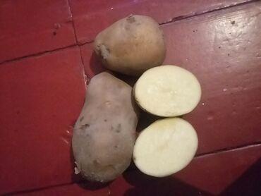 карты памяти sony для навигатора в Кыргызстан: Срочно картошка сатылат 5тон, 40тонн жогору болсо келишимдуу сатылат