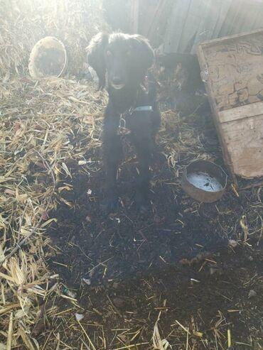 3 в 1 принтер сканер ксерокс in Кыргызстан | ПРИНТЕРЫ: Собаки
