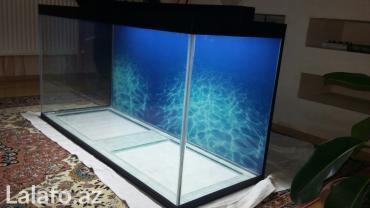 Bakı şəhərində Teze hazirlanip 325 litrelik akvarium 10mll wuwenin qalinliqi qapaqi