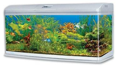 Животные - Ош: Аквариум Jebo 289 liter akvaryum.Толька аквариум без тумба.Новая стоит