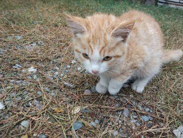 73 объявлений   ЖИВОТНЫЕ: В добрые руки отдадим 2 котенка :1 мальчик, 1 девочка