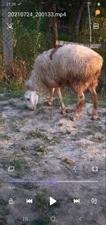 Животные - Маевка: Кочкор 5 мес. Писать на вотсап