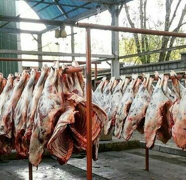 Принимаем мясо Бычков тёлок коров в любом количестве через