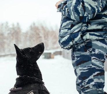 Дрессировка собак с 5 месяцев и выше.ОКД,ЗКС. в Бишкек