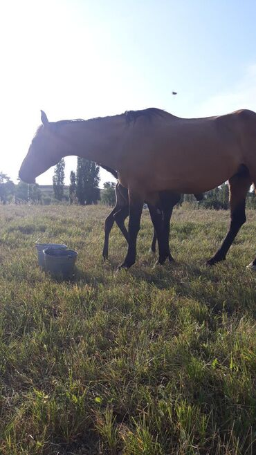 Животные - Тогуз Булак: Лошади, кони
