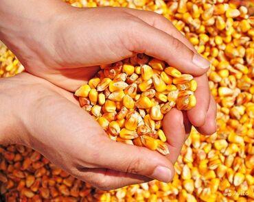 82 объявлений   ЖИВОТНЫЕ: Продаю кукуруза сорт Маями