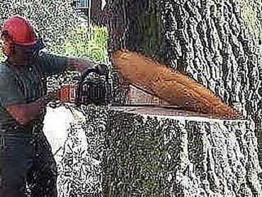Кладка - Кыргызстан: Пилю деревья.Спилить дерево.Срубить дерево.Спилить ветки.Бак
