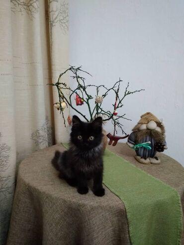 Фонд помощи Животным Добрые руки, ищет добрые руки для котёночка, мила