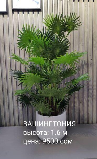 хуавей нова 5т цена бишкек в Кыргызстан: Большой выбор искусственных деревьев. Новое поступление. Можно