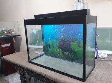 Bakı şəhərində yeni il qabaqi endirim teze akvarium uzunu 50 sm hundurluyu 40 sm eni