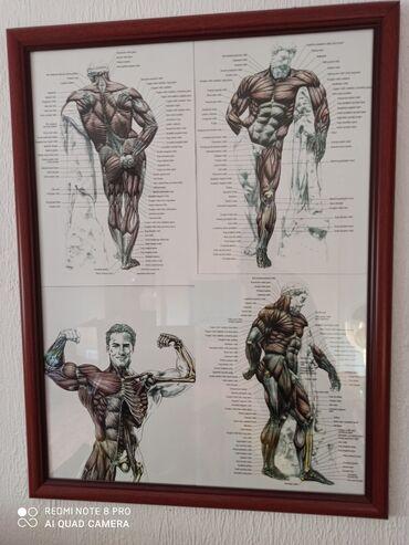 Sport i hobi | Cuprija: Na prodaju ram sa posterom muške muskulature