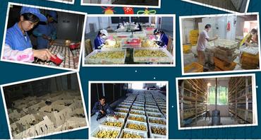 Инкубатор для яиц в Бишкек