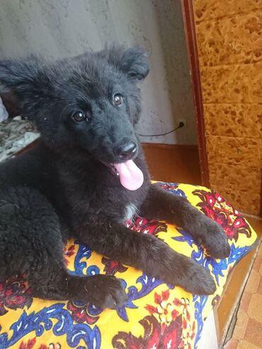 Девочка, ещё Малышка 4 месяца, но весит уже 10 кг, будет крупной