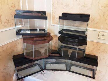 Akvariumlar Azərbaycanda: Akvariumlar