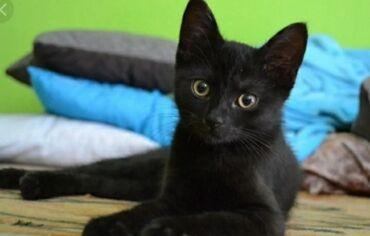 Животные - Ала-Тоо: Отдадим котенка-найденыша,как на фото, в добрые рукиДевочка, около 3