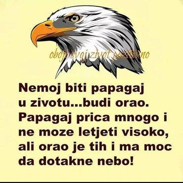 Radi povecanog obima poslovanja moja kompanija je u potrazi za - Novi Sad