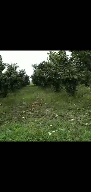 Daşınmaz əmlak - Xudat: Torpaq sahələrinin satışı 10 sot Mülkiyyətçi, Bələdiyyə