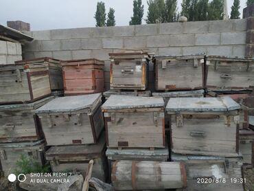 размер 36 40 в Ак-Джол: Ящики для пчеловодства 40 штук