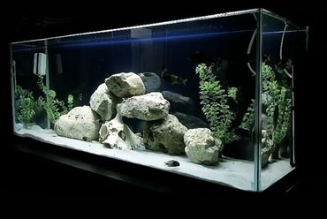 guppi baliqlari - Azərbaycan: Akvarium butun avadanliqi ve bahali baliqlari ile birlikde satilir t
