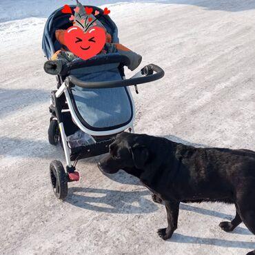 Продаю детскую коляску б/у фирменная sonnylove  покупали год назад за