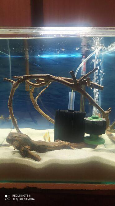 Akvariumlar - Azərbaycan: Nano Akvarium yalnız barter. Ev heyvanları ilə barter edərəm. Təklifi