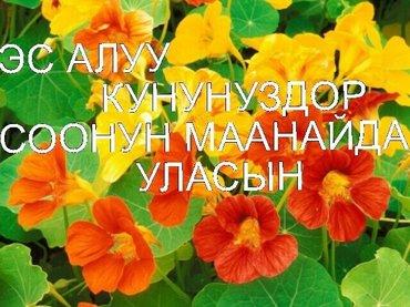 кошумча жумуш иштейм дегендер чалгыла в Бишкек