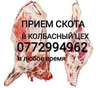 вакцины для животных в Кыргызстан: Прием коров бычков тёлок и лошадей любой упитанности . Звоните в любое