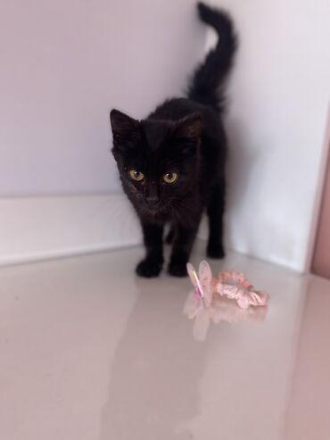 парогенератор бишкек in Кыргызстан   ГРУЗОВЫЕ ПЕРЕВОЗКИ: Котёнок, 1,5 -2 месяца. Подкинули под дверь в коробке. Котик явно